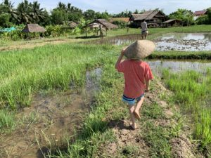 The Living Land Co Rice Farming Experience w Kids